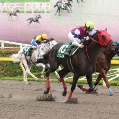 第21回 ユニコーンステークス 2016 マヨトラ競馬アイドル予想