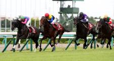 第67回 神戸新聞杯(GⅡ)